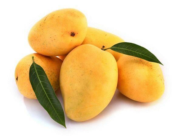 Kuttiattoor Mango