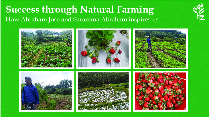 Success through Natural Farming – how Abraham Jose and Saramma Abraham inspires us